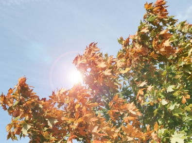 Weather Lore: Can Leaves Predict a Storm? featured image