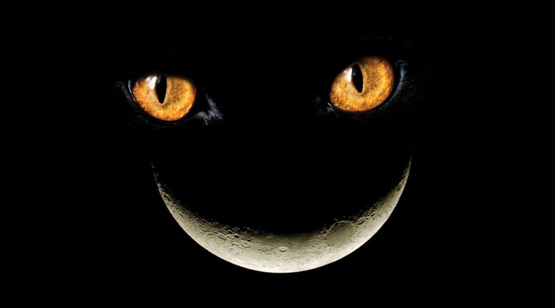 Cheshire Cat - Cat