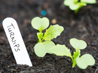 Growing Vegetables Into Fall And Winter featured image