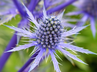 10 Pretty Plants and Flowers That Deer Don't Like featured image