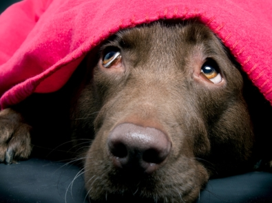 6 Ways to Ease Your Dog's Fear of Fireworks and Thunder featured image