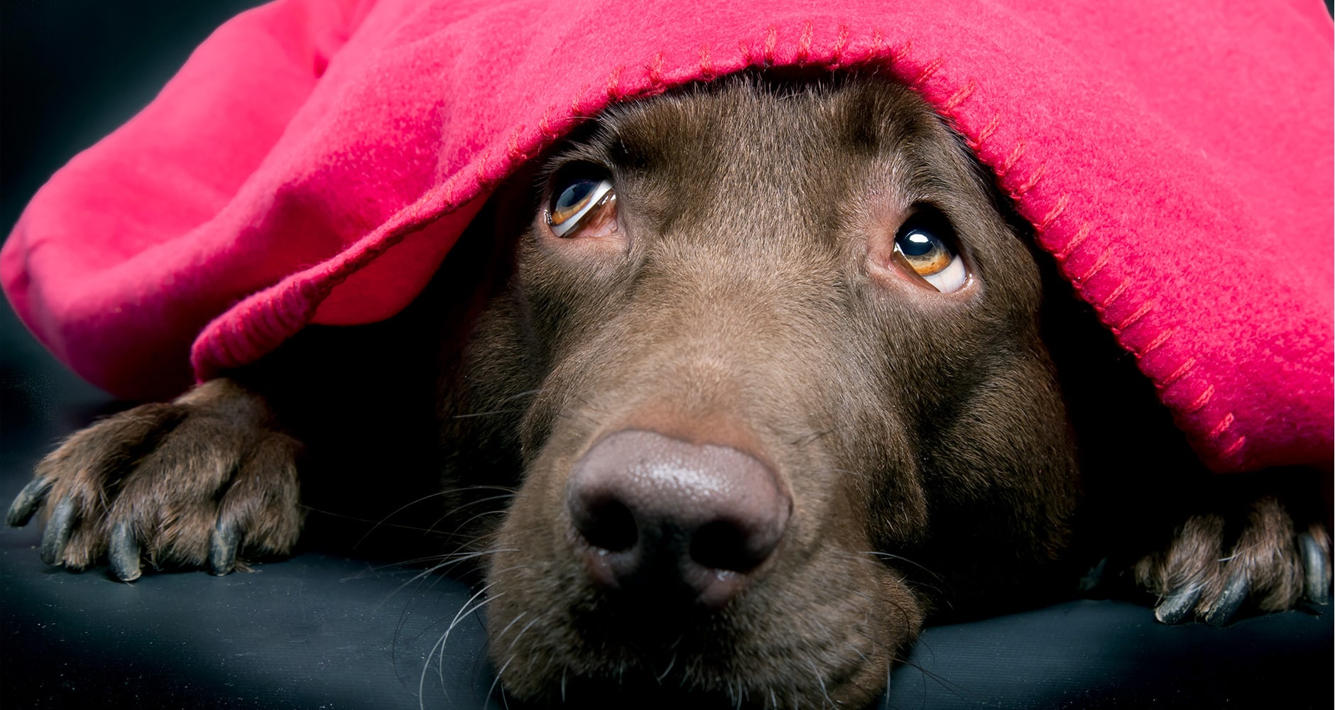6 Ways to Ease Your Dog's Fear of Fireworks and Thunderimage preview