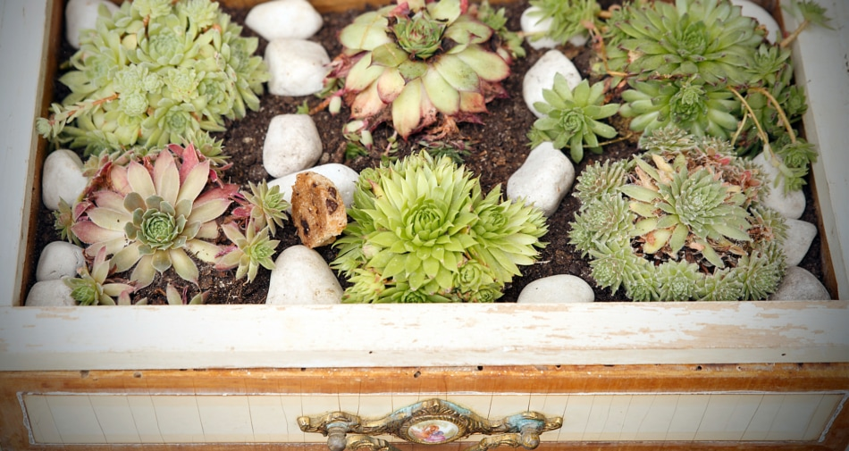 Flowerpot - Drawer with succulents