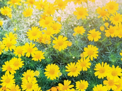 4 Drought-Resistant Plants That Love hot, Dry Weather featured image