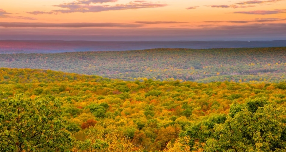 Sweeping view of autumn colored forest during twilight hours.