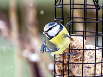 10 Winter Bird Foods And The Birds That Love Them featured image