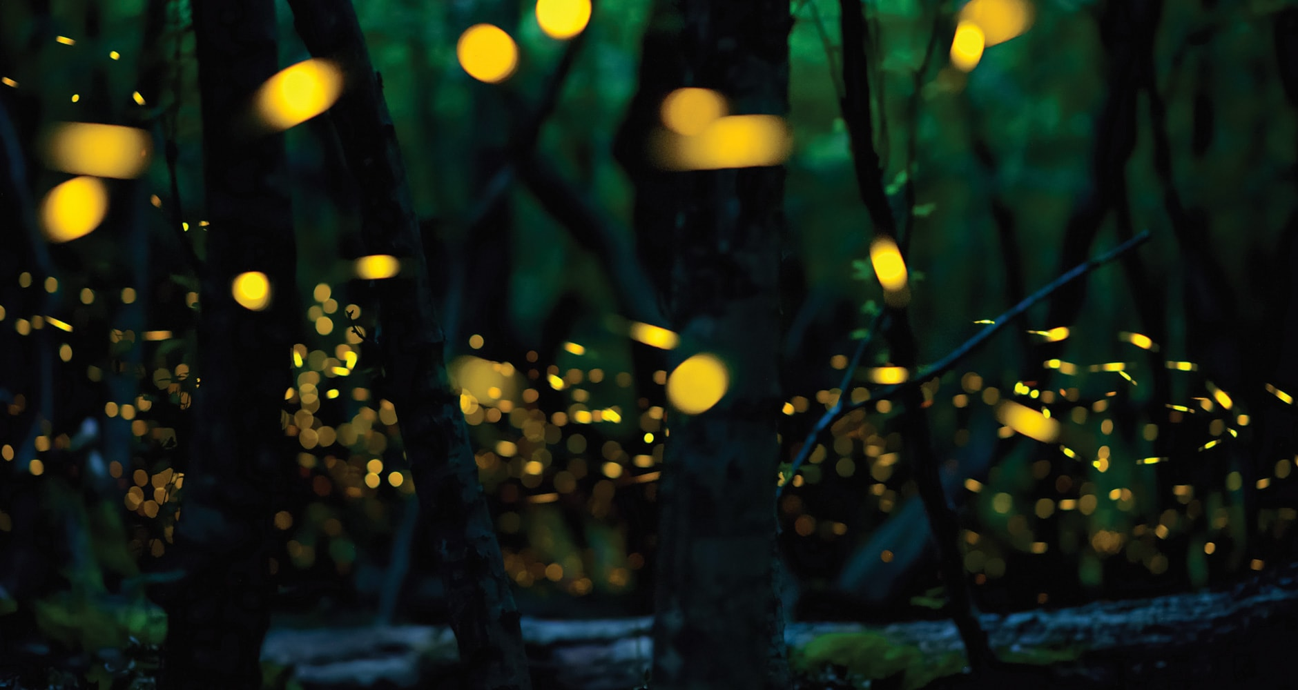 When Will The Fireflies Light Up Your Back Yard?image preview