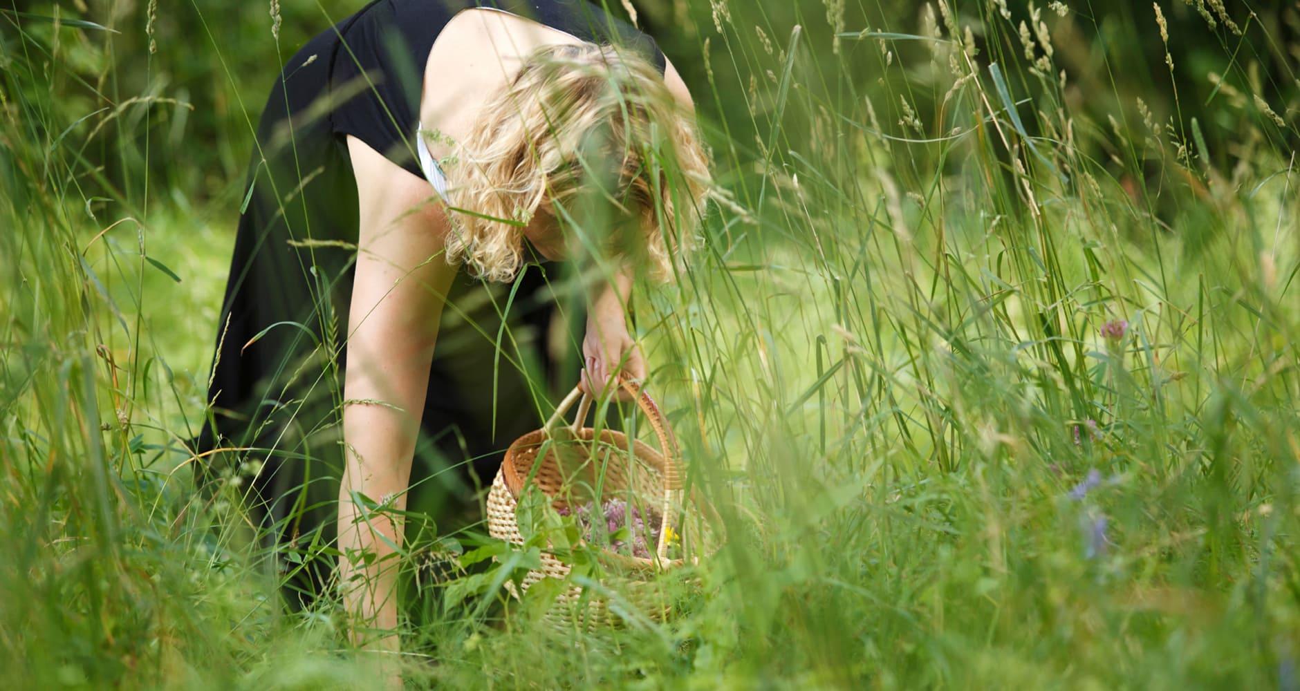 20 Wild Edible Plants Farmers Almanac