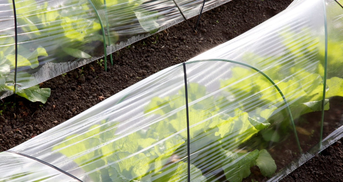 Polytunnel - Horticulture