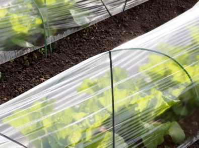 Extend Your Harvest: Grow Undercover featured image