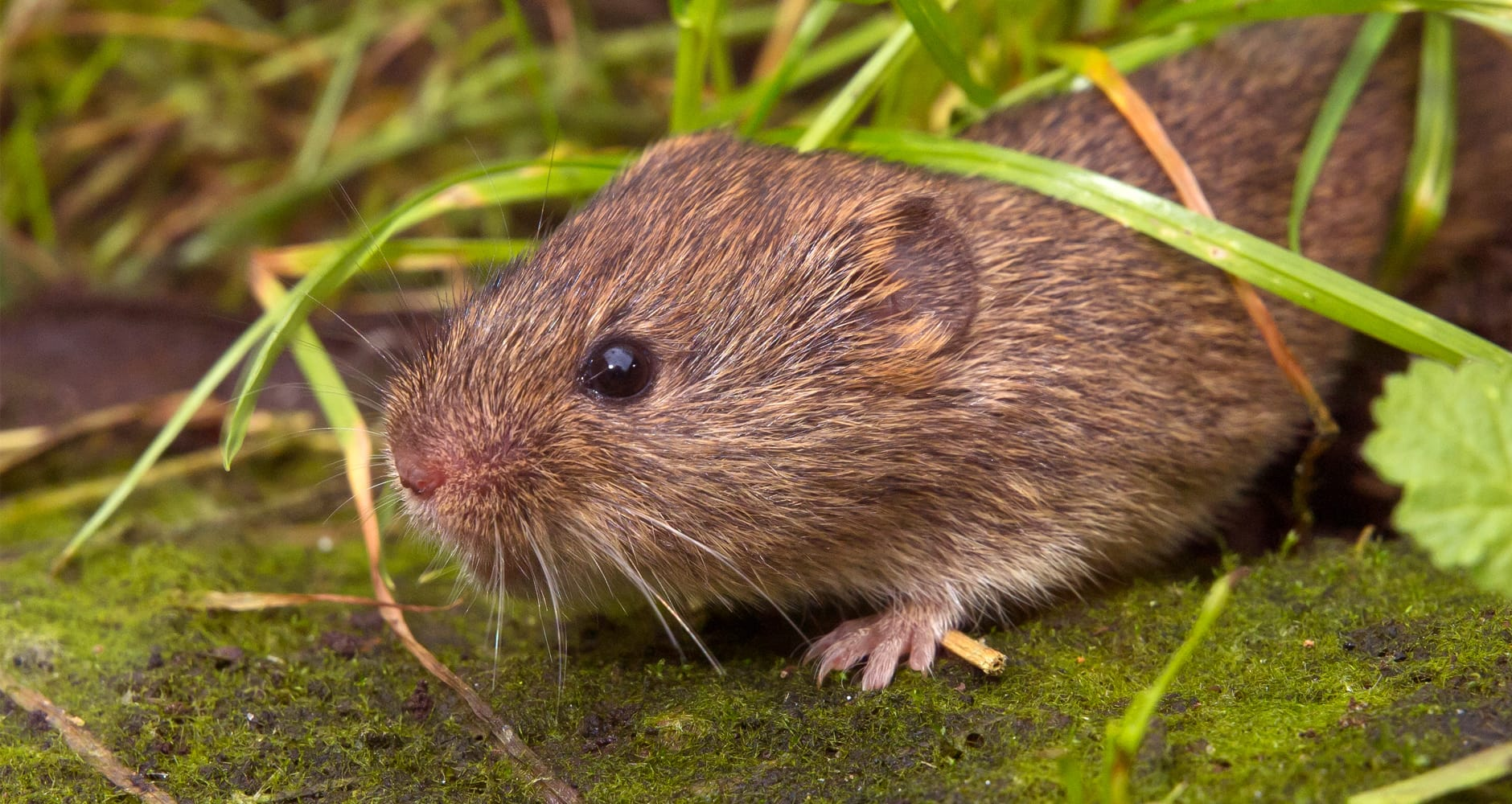 6 Easy Strategies To Prevent A Vole Infestationimage preview