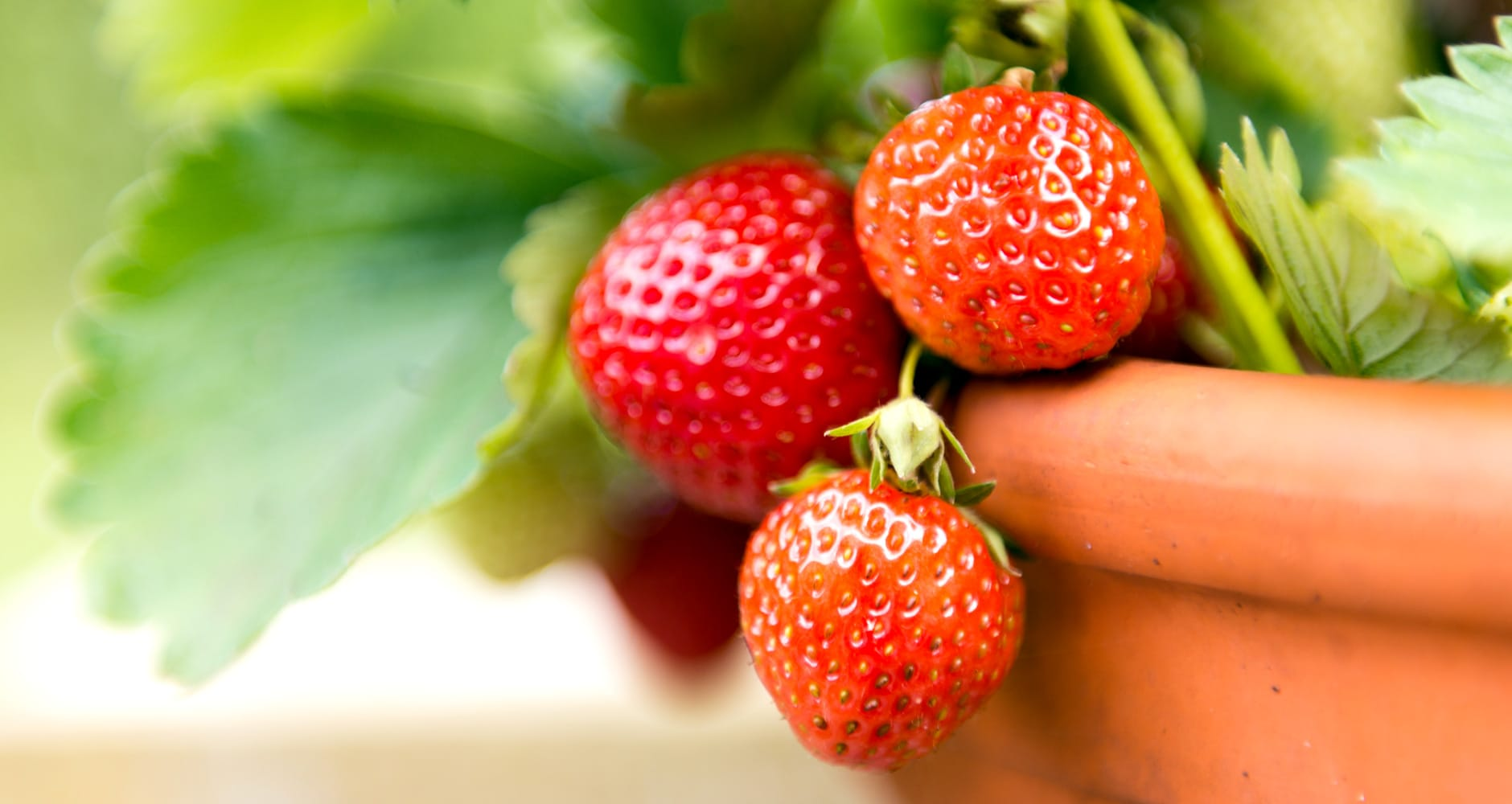 Perk Up Your Patio With Strawberries!image preview