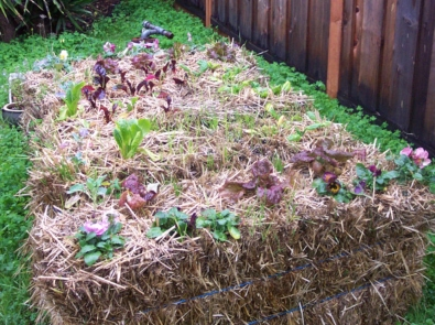 Gardening Made Easy With Straw Bales! featured image