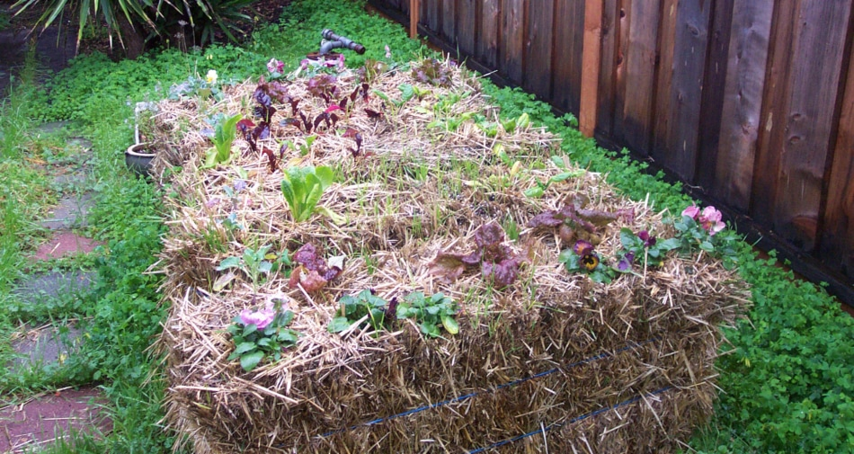 Gardening Made Easy With Straw Bales!