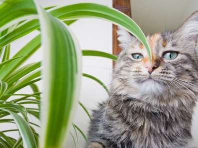 30 Common Houseplants From A-Z That Are Toxic To Pets featured image