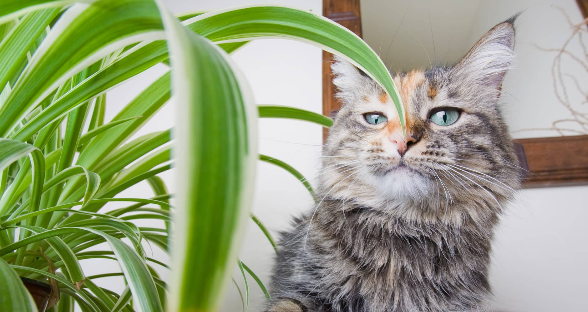 30 Common Houseplants From A-Z That Are Toxic To Petsimage preview