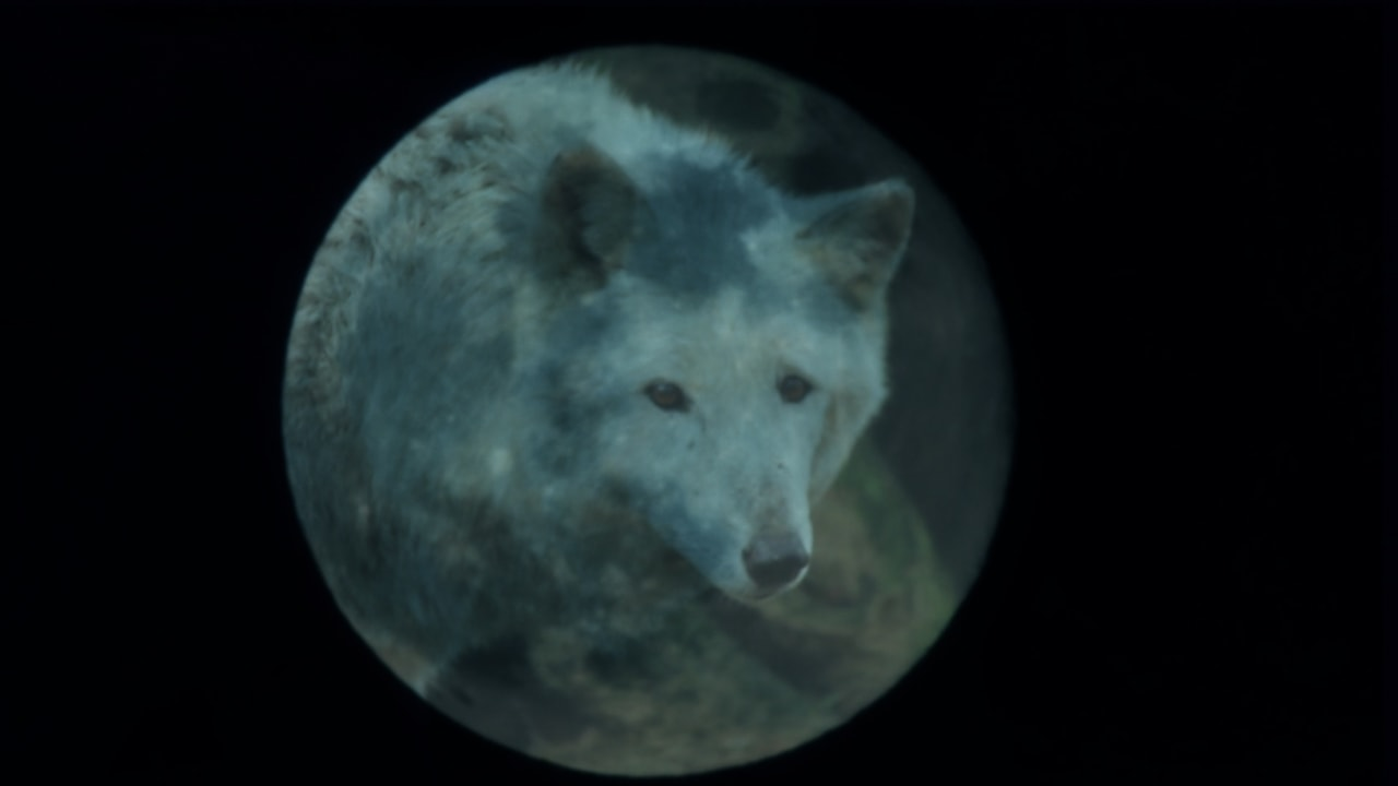 How Much Do You Know About January's Full Wolf Moon?image preview