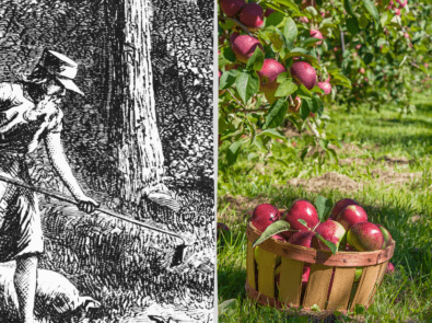 Johnny Appleseed Day featured image