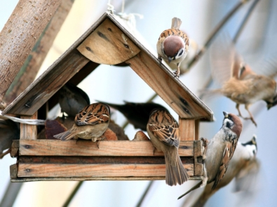 6 Tips To Keep House Sparrows Away From Your Feeders featured image