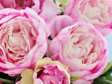 5 Favorite Flowers To Give Mom on Mother's Day featured image
