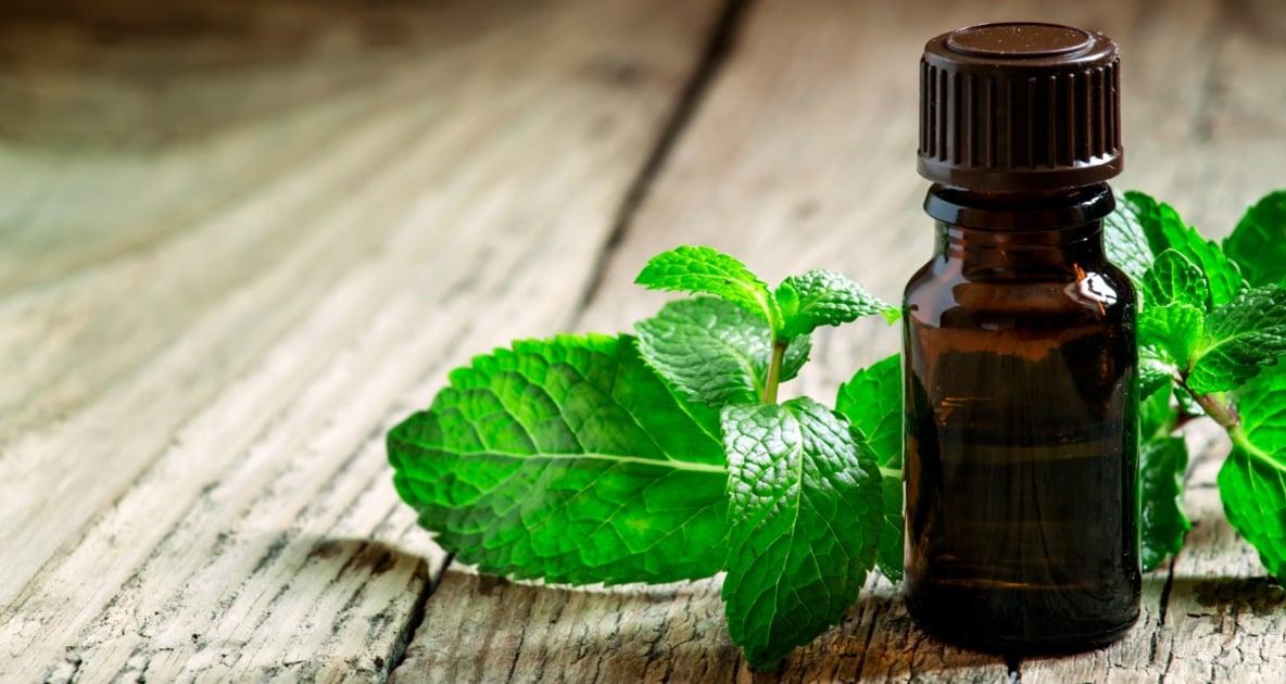 Peppermint extract - Herbal medicine