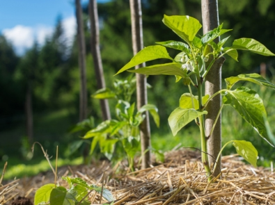 Fight Weeds Naturally by Mulching featured image