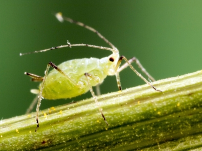 DIY Pest Control Sprays Made From Plants In Your Garden featured image