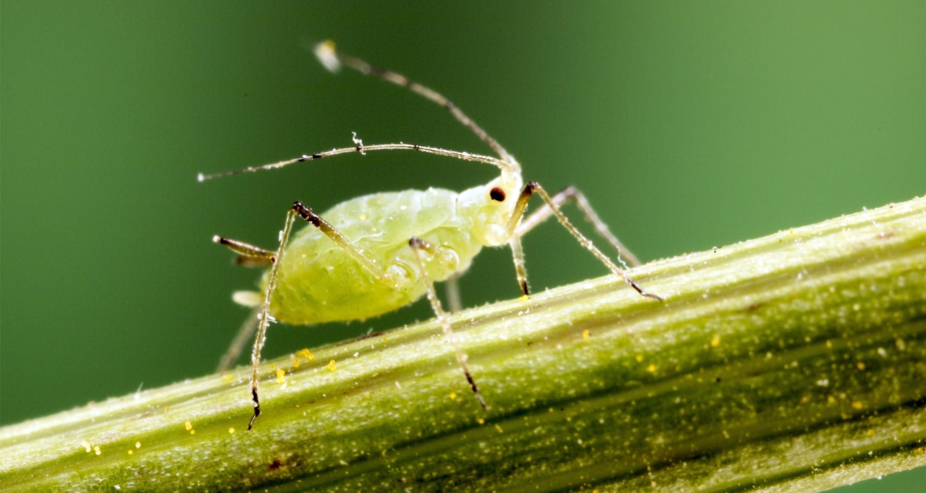 DIY Pest Control Sprays Made From Plants In Your Gardenimage preview