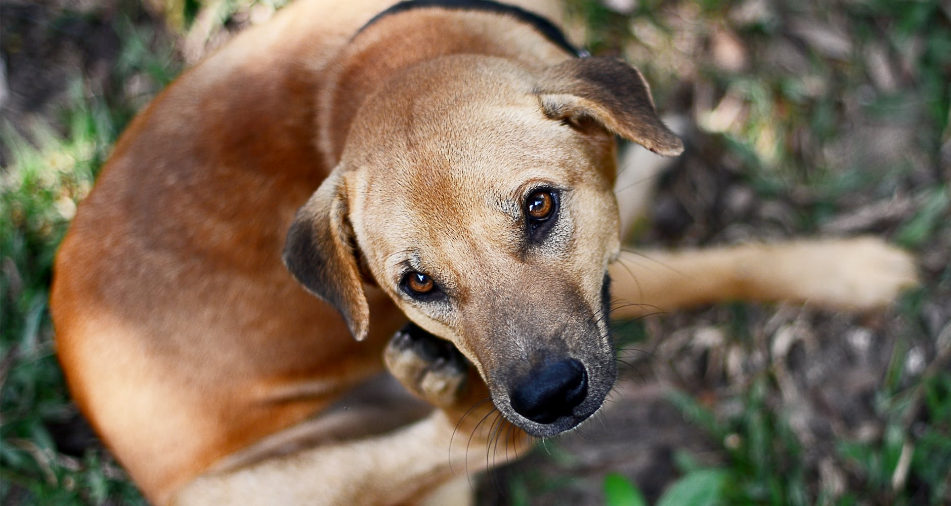 Natural Remedies For Your Dog's Skin Allergiesimage preview