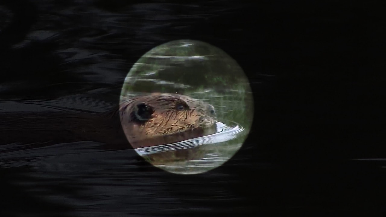 Why Is November's Full Moon Called the Beaver Moon?image preview
