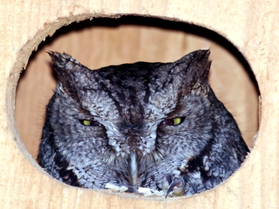 Owl Boxes: Nature's Pest Control featured image