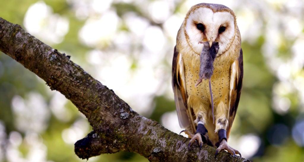 Owl boxes - photo of owl
