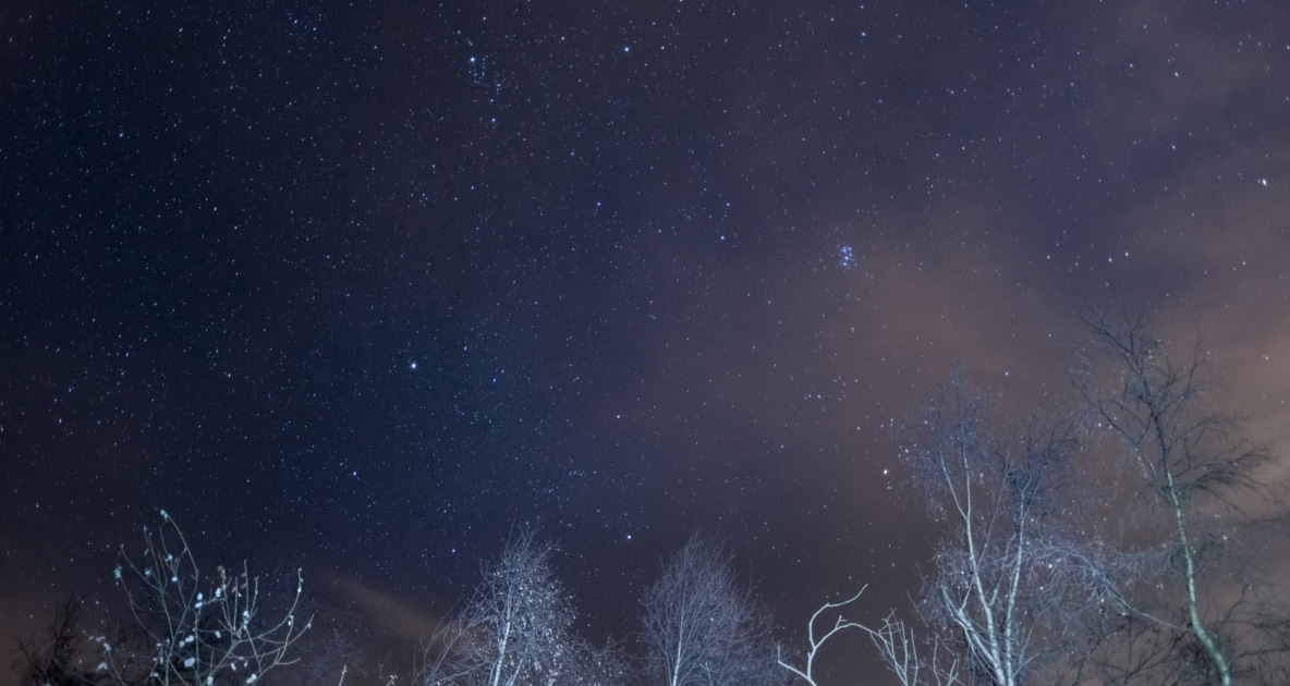 Pleiades start appearing in night sky above snow covered trees.