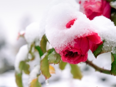 Protect Your Garden From Winter Damage! featured image