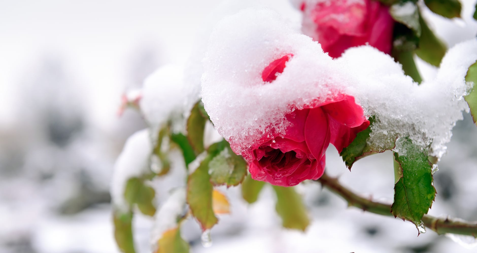Protect Your Garden From Winter Damage!image preview