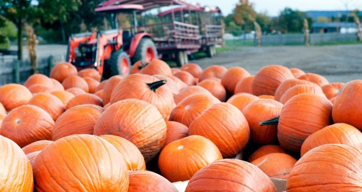 Squash - Pumpkin