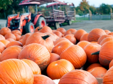 16 Little Known Pumpkin Facts featured image