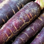 Stock photography - Vegetable