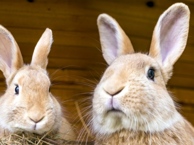 """It's The 1st of the Month: Did You Say """"Rabbit Rabbit""""? featured image"""