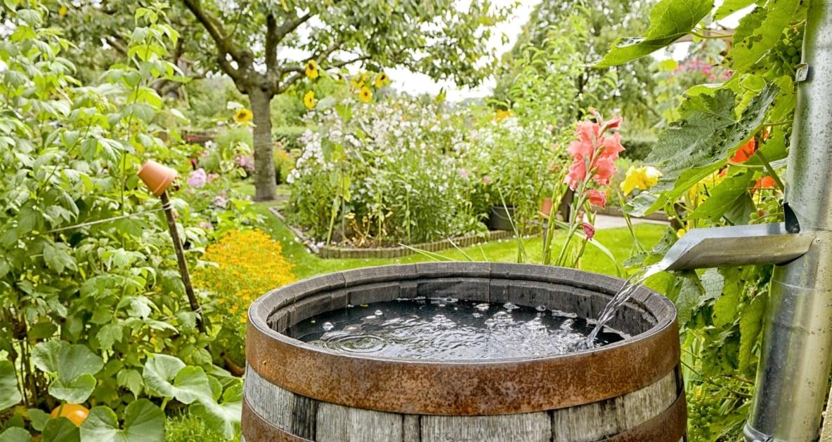 Rainwater harvesting - Rain Barrel