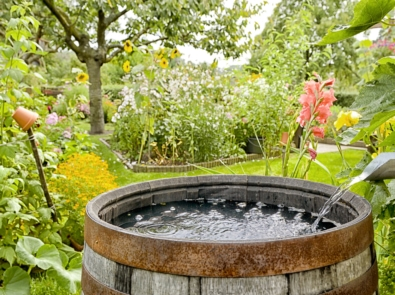 Collecting Rainwater For The Garden featured image