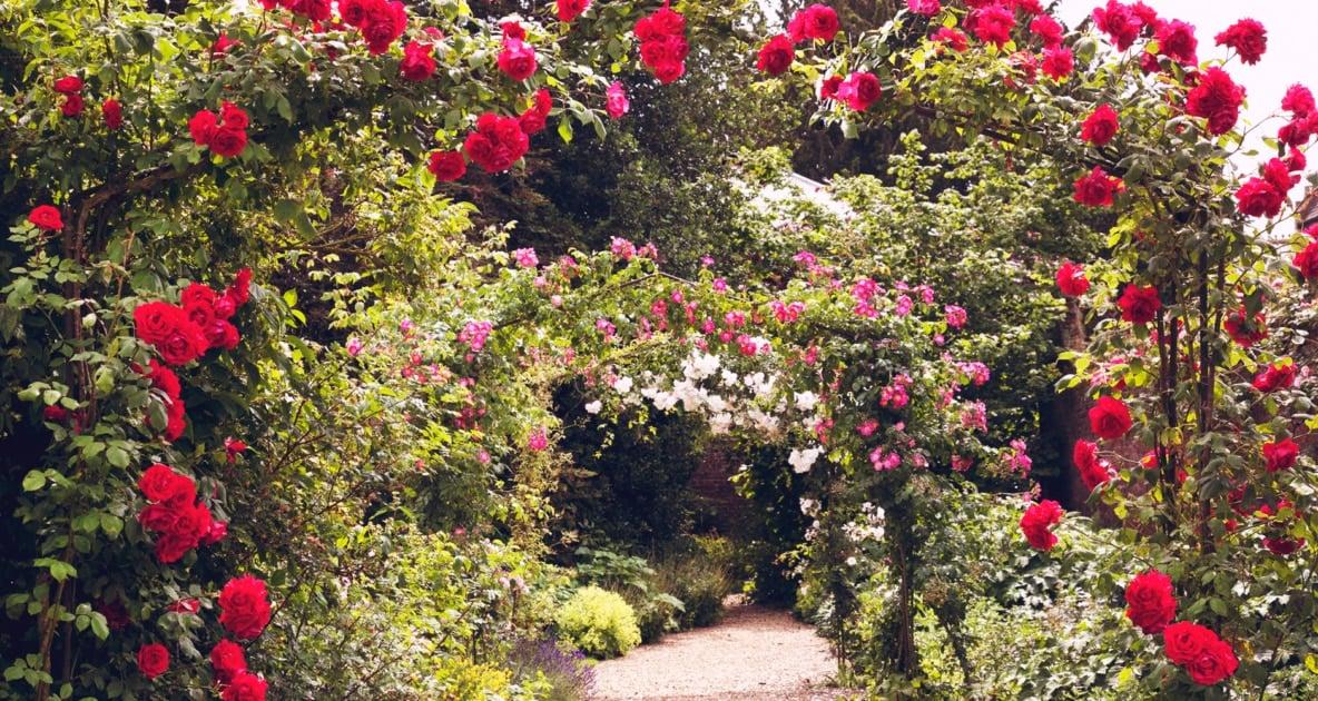 Garden - Rose garden