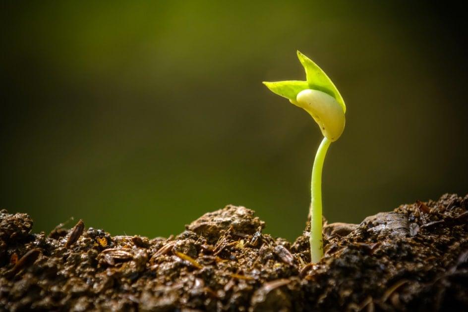 Soil - Soil pH