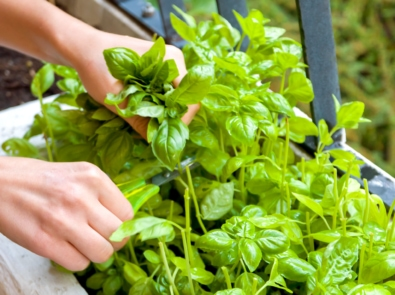 Container Gardening: Grow Your Own Food in Small Spaces! featured image