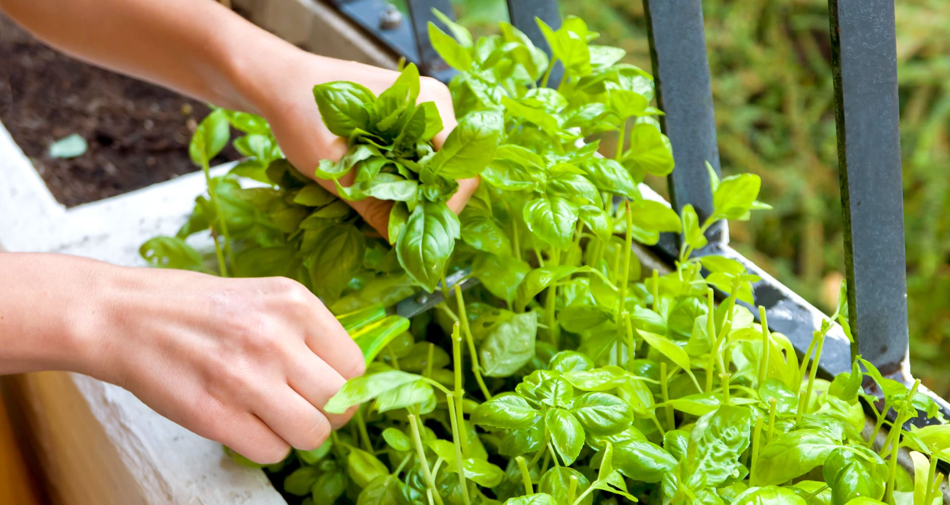 Grow Your Own Food in Small Spaces!image preview