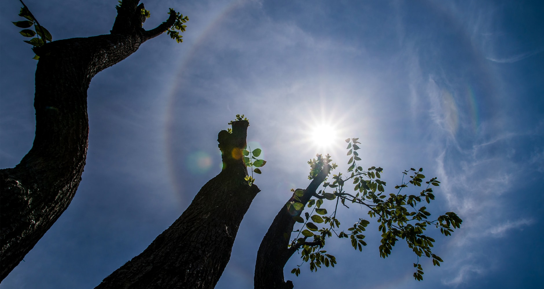What Are Sun Halos, Sun Dogs, and Sun Pillars?image preview