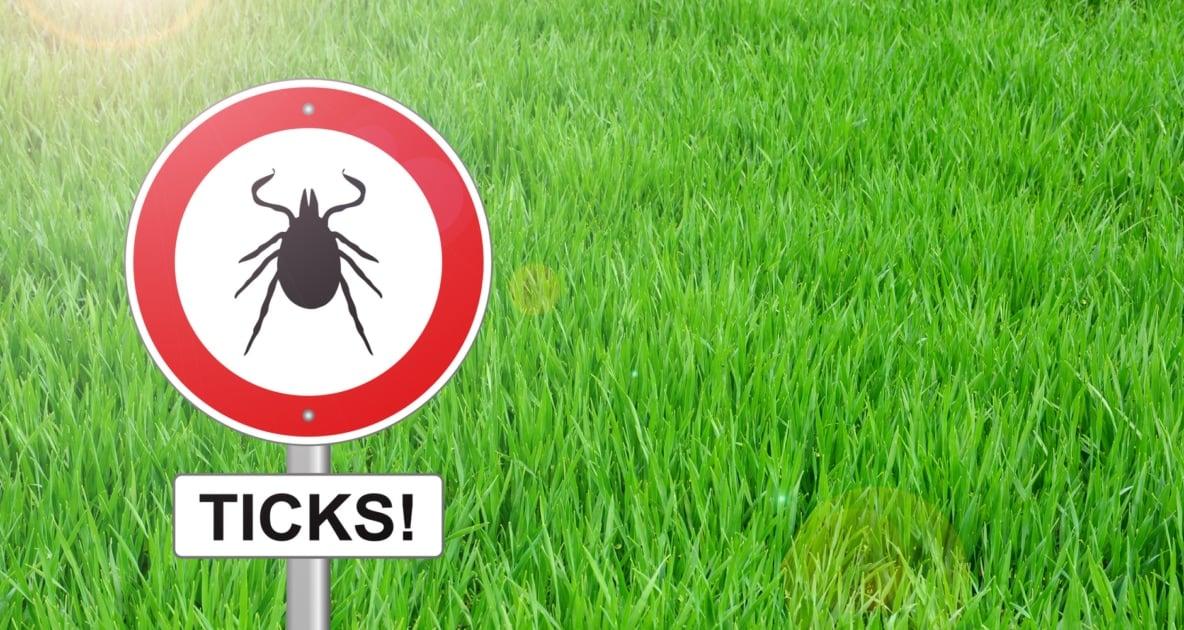 Lyme disease - Tick