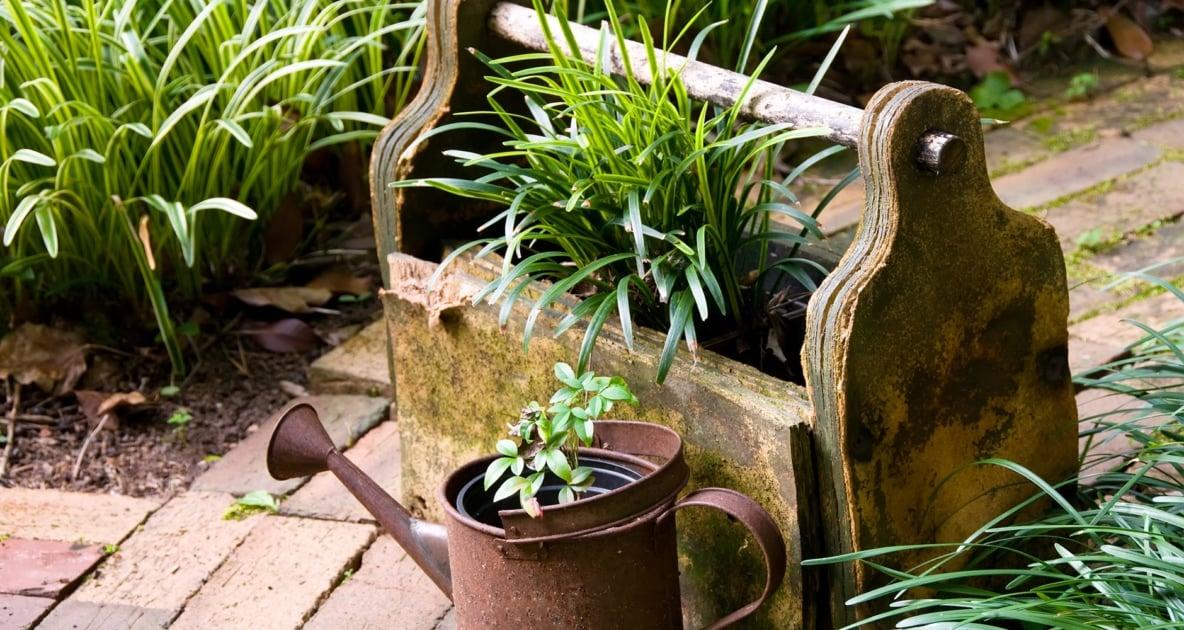 Flowerpot - Container garden