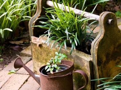5 Container Gardening Ideas You'll Love featured image