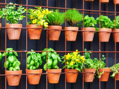 Growing Up: Vertical Gardening featured image